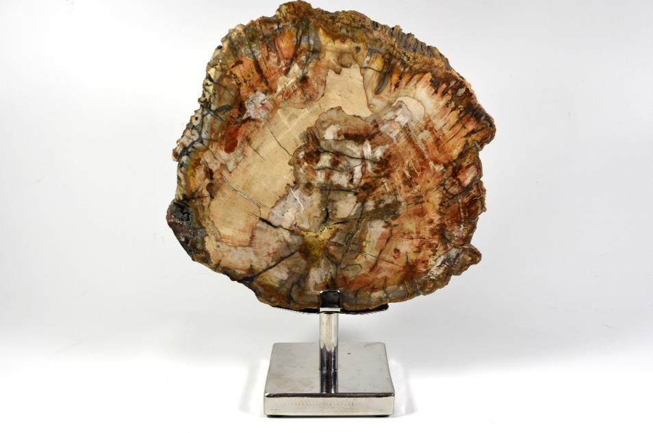 fossil wood slice on stand