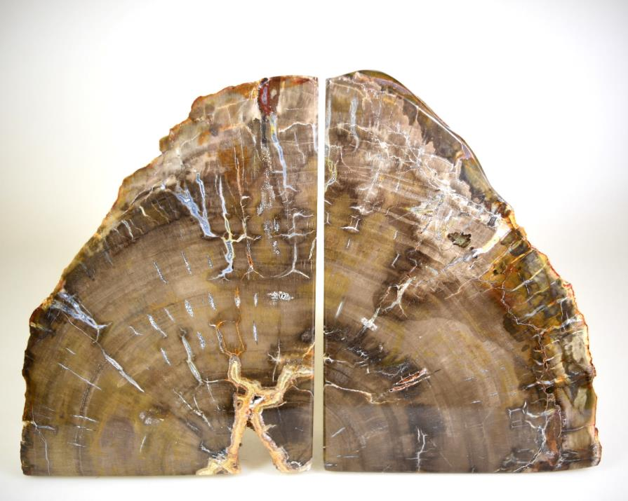 Fossil Wood Book Ends 15cm | Image 1