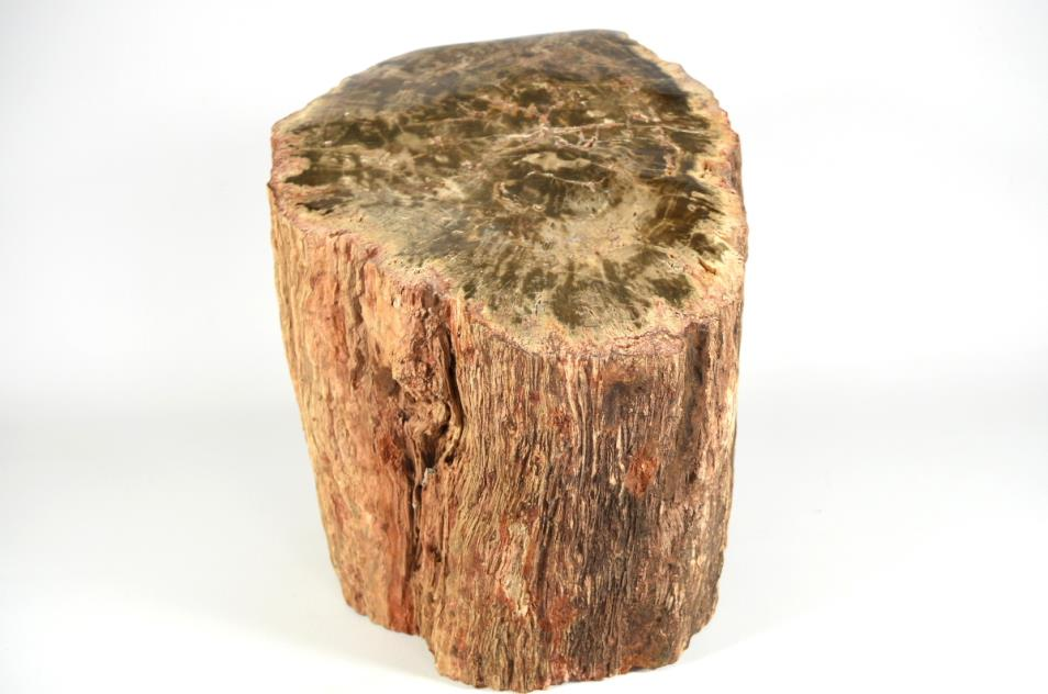 Large Fossilised Wood Log 30cm | Image 1