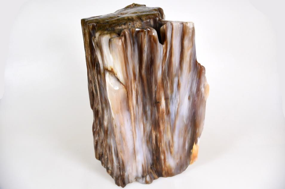 Agatized Fossil Wood 21cm | Image 1