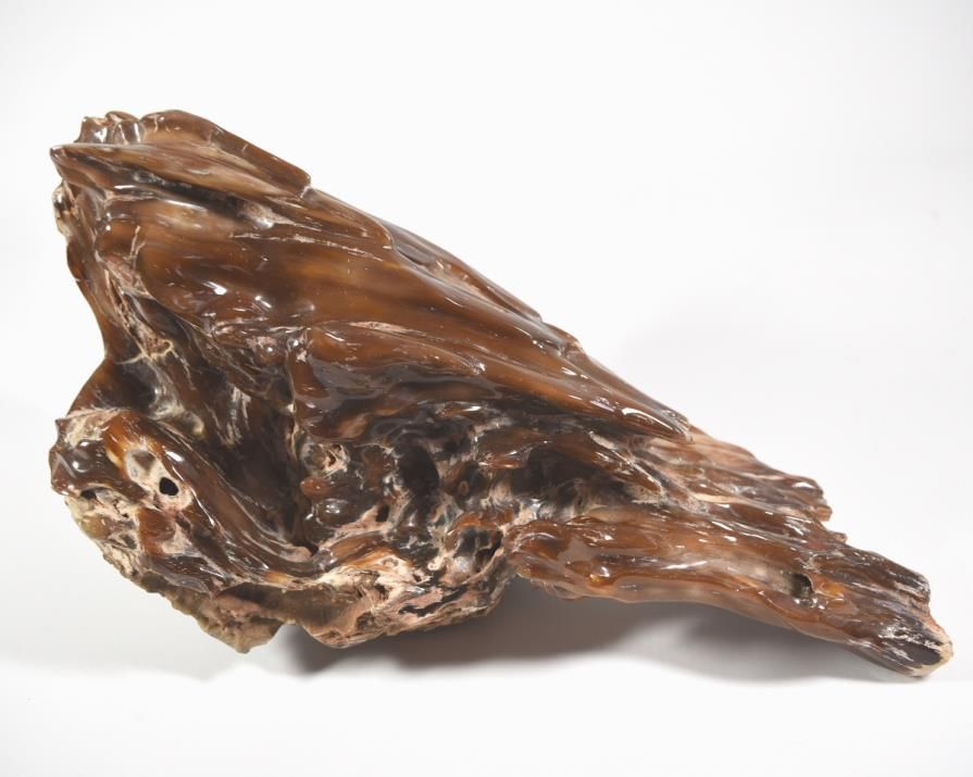 Agatized Fossil Wood 33cm | Image 1