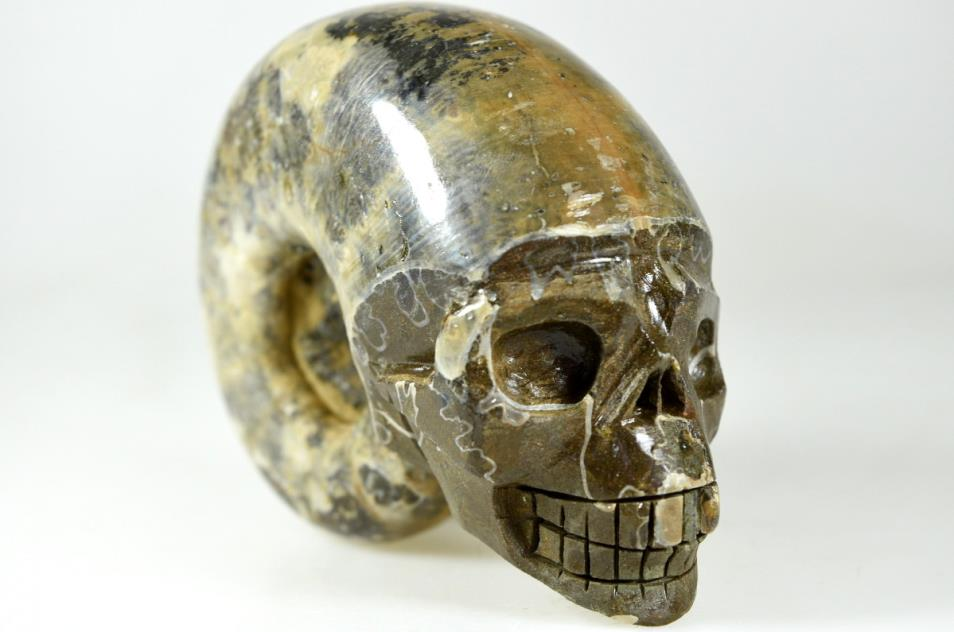 Ammonite Skull Carving 11cm | Image 1