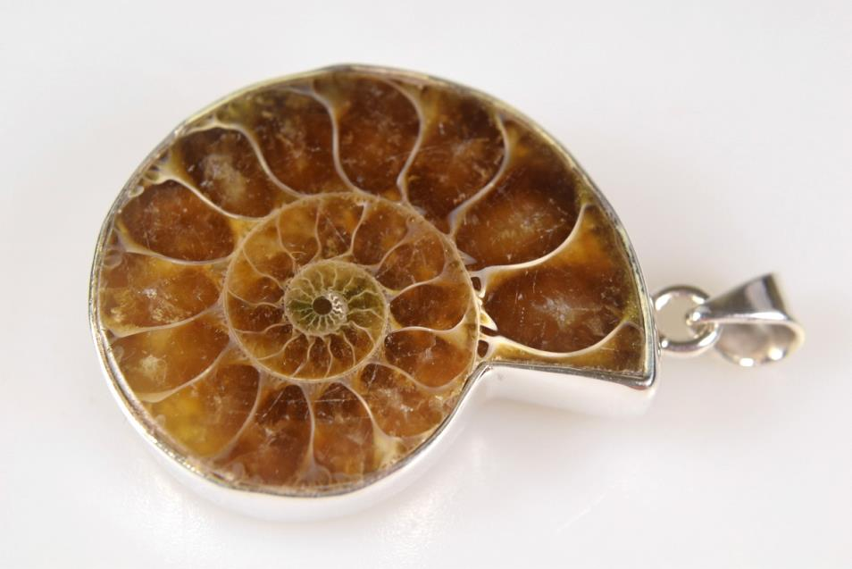 Ammonite Pendant 12.4grams | Image 1