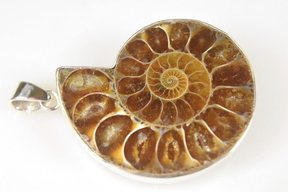 Ammonite Pendant 15.2grams | Image 1