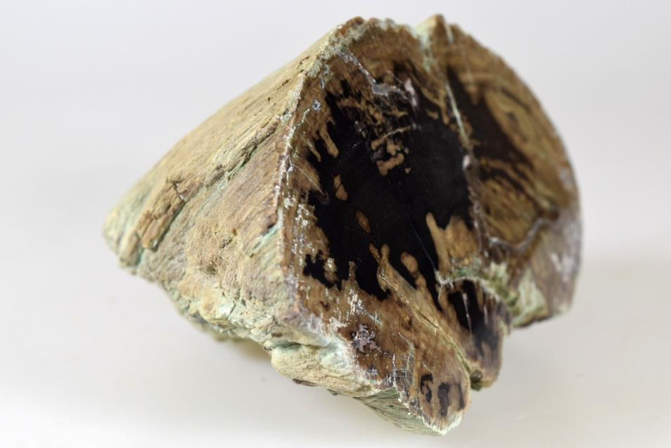 Fossilised Wood Branch 12.6cm | Image 1