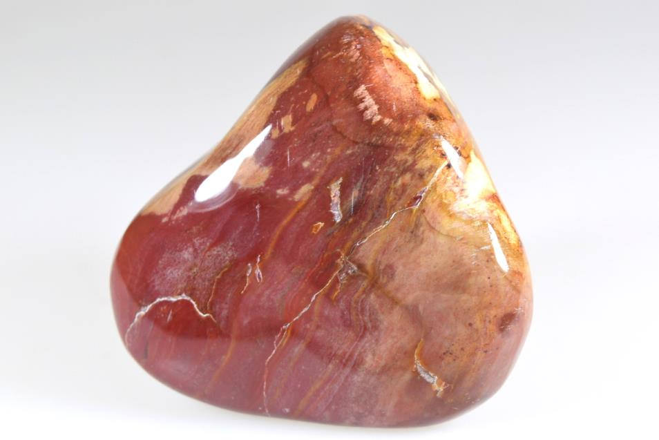 Fossil Wood Pebble 290grams | Image 1