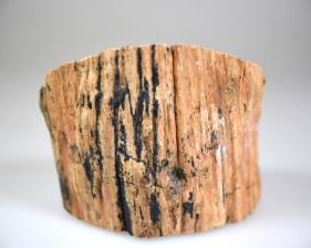 Fossilised Wood Branch bevel cut 7.2cm | Image 4