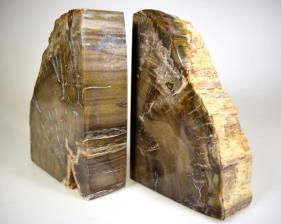 Fossil Wood Book Ends 15cm | Image 4