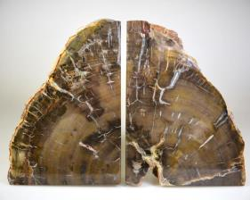 Fossil Wood Book Ends 15cm | Image 6