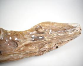 Agatized Fossil Wood 30.5cm | Image 3