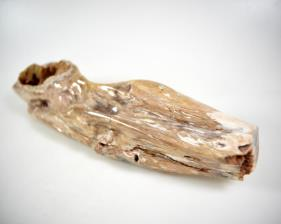 Agatized Fossil Wood 30.5cm | Image 4