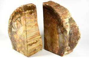 Fossil Wood Book Ends 25cm | Image 4