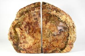 Fossil Wood Book Ends 25cm | Image 5