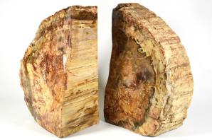 Fossil Wood Book Ends 25cm | Image 7