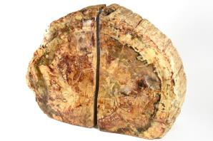 Fossil Wood Book Ends 25cm | Image 9
