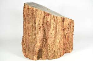 Large Fossilised Wood Log 30cm | Image 6