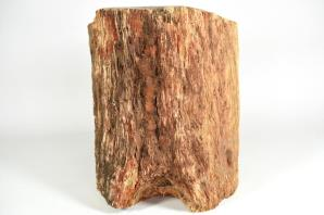 Large Fossilised Wood Log 30cm | Image 8