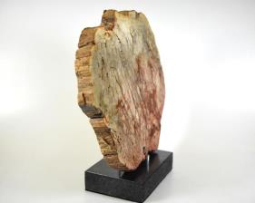 Mounted Fossilised Wood Slice 27cm | Image 3