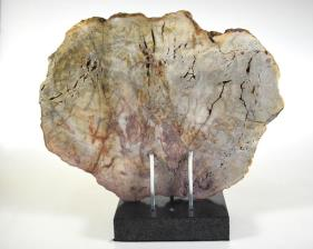 Mounted Fossilised Wood Slice 27cm | Image 4