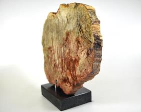 Mounted Fossilised Wood Slice 27cm | Image 5