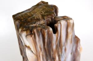 Agatized Fossil Wood 21cm | Image 2