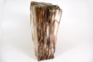 Agatized Fossil Wood 21cm | Image 3