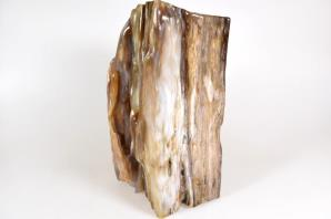 Agatized Fossil Wood 21cm | Image 4