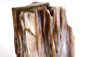 Agatized Fossil Wood 21cm | Image 8