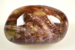 Fossil Wood Pebble 272grams | Image 2