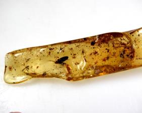 Copal with Insects 12cm | Image 5
