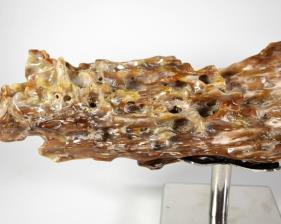 Agatized Fossil Wood 41cm | Image 2