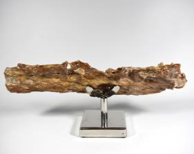 Agatized Fossil Wood 41cm | Image 5