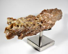 Agatized Fossil Wood 41cm | Image 6