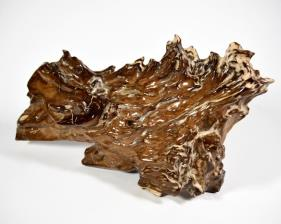Agatized Fossil Wood 39.5cm | Image 4