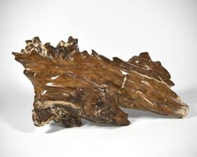 Agatized Fossil Wood 39.5cm | Image 6