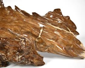Agatized Fossil Wood 39.5cm | Image 8
