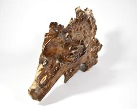Agatized Fossil Wood 39.5cm | Image 9