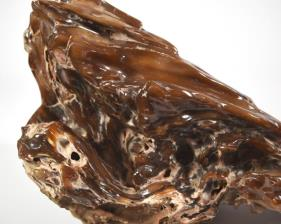 Agatized Fossil Wood 33cm | Image 2