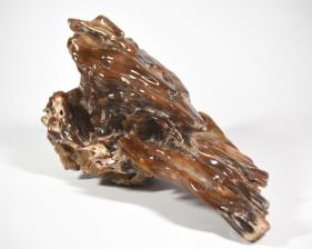 Agatized Fossil Wood 33cm | Image 4