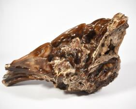 Agatized Fossil Wood 33cm | Image 5