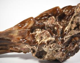 Agatized Fossil Wood 33cm | Image 6