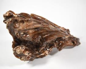 Agatized Fossil Wood 33cm | Image 7