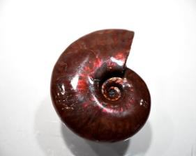 Ammonite red Iridescent 5.15cm | Image 5