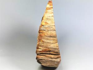 Fossilised Wood Branch 17.7cm | Image 3