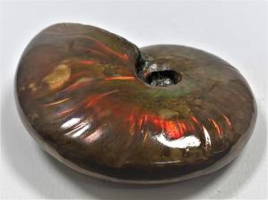 Ammonite Red Iridescent 6.8cm | Image 3