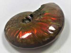 Ammonite Red Iridescent 6.8cm | Image 5