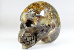 Ammonite Skull Carving 10.3cm | Image 2