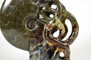 Ammonite Carving 13.2cm | Image 6
