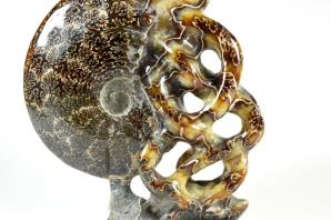 Ammonite Carving 15.2cm | Image 3