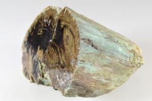 Fossilised Wood Branch 12.6cm | Image 5
